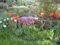Privatgarten in Marburg Wehrda: Bild 1