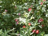 Privatgarten in Marburg Wehrda: Bild 7