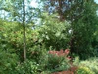 Privatgarten in Marburg Wehrda: Bild 8