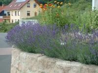 Privatgarten in Mellnau: Bild 2